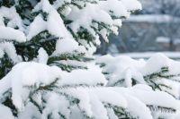 За выходные в Таштаголе выпало до 47 мм снега.