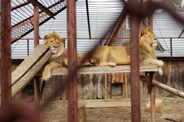 Вещи можно принести в зоопарк в течение дня до 18 часов.