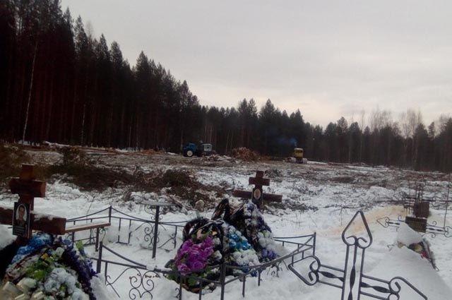 Рабочая бригада безжалостно валит все деревья. Сучки и пни жгут прямо тут же.