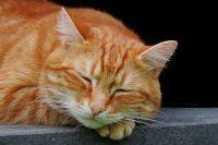 В Новотроицке кот стал причиной судебных тяжб.