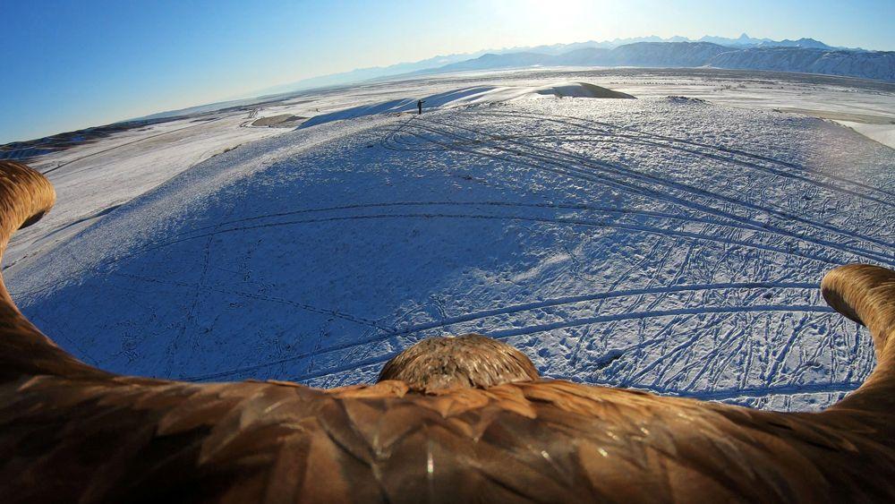 Беркут во время традиционного охотничьего соревнования в поселке Кайнар в Алматинской области, Казахстан.