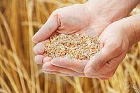 Злоумышленники покупали несуществующее зерно, отправляя за него деньги в Казахстан