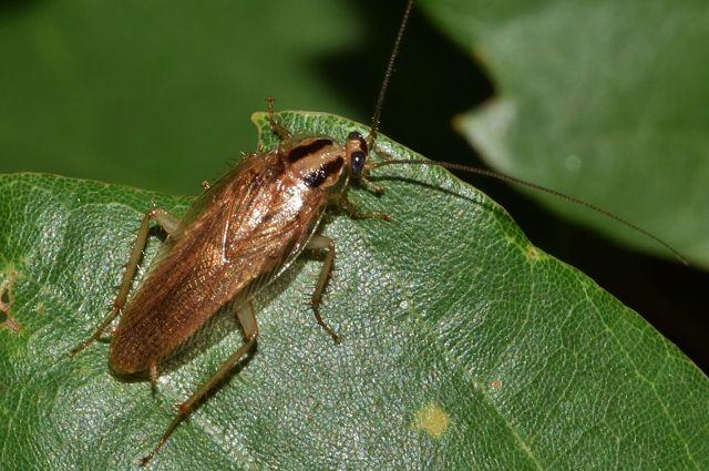 В Ижевске закрыли киоск из-за таракана в шаурме