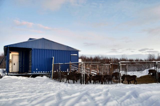 Новый комплекс по заготовке оленины открыли в Шурышкарском районе