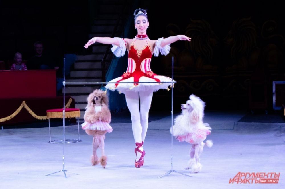Кроме диких хищников на арене выступали и другие животные, к примеру, собаки, старательно исполняющие балет