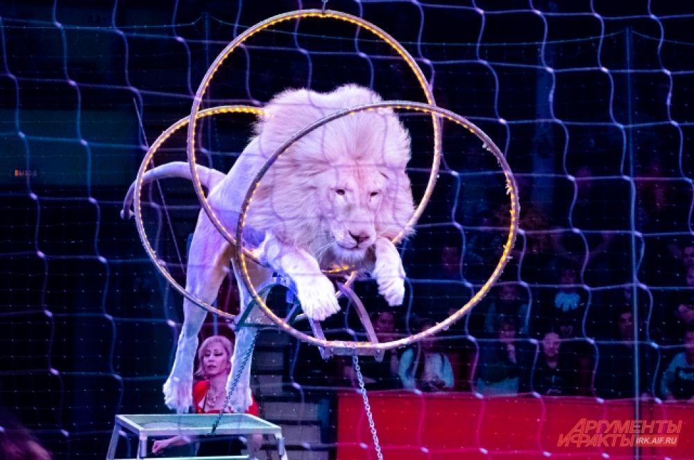 Главной его «фишкой» стали уникальные хищники – белые львы