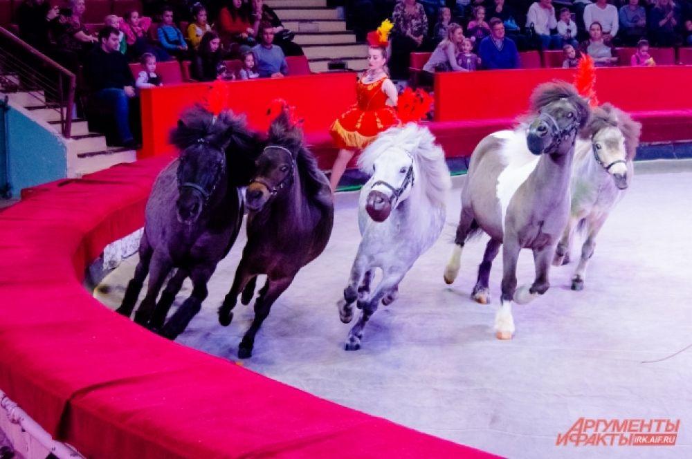 А после них по манежу галопом пронеслись очаровательные шетлендские пони - самые маленькие пони из Шотландии