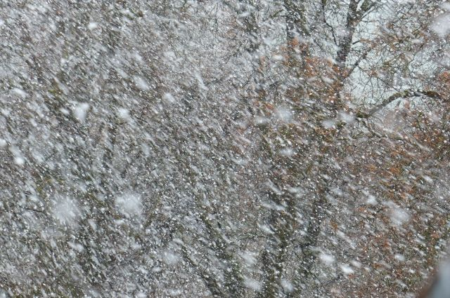 На протяжении суток будут идти дожди, временами сильные, выпадет около 10-12 мм осадков.