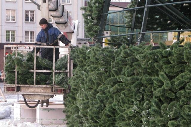 Калининградская ёлка входит в десятку самых высоких в России