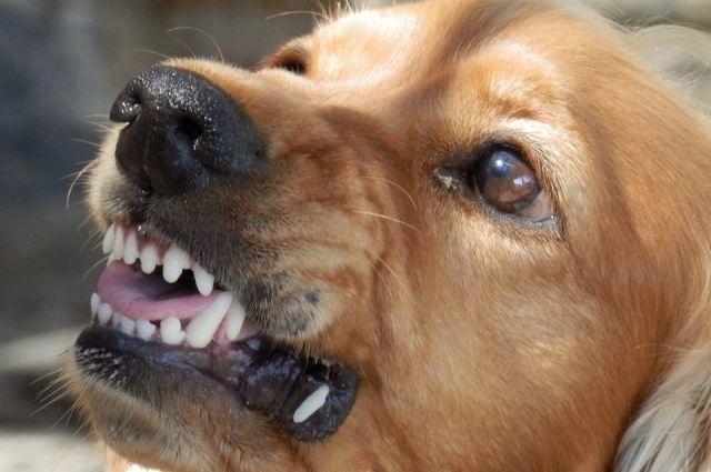 Собаки напали на мужчину в том же районе и в это же утро.