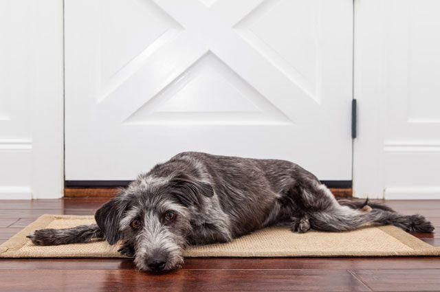 Домашних собак ветеринары рекомендуют срочно привить.