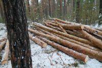 Активисты ОНФ не раз ловили черных лесорубов