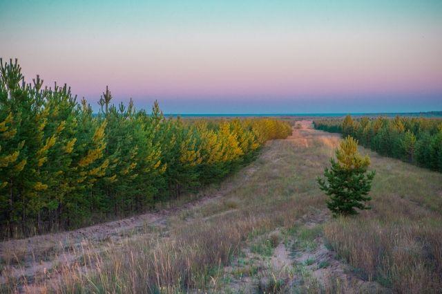 Внешнее защитное кольцо сформировано в границах земель лесного фонда Искитимского, Колыванского, Мошковского, Новосибирского лесничеств.