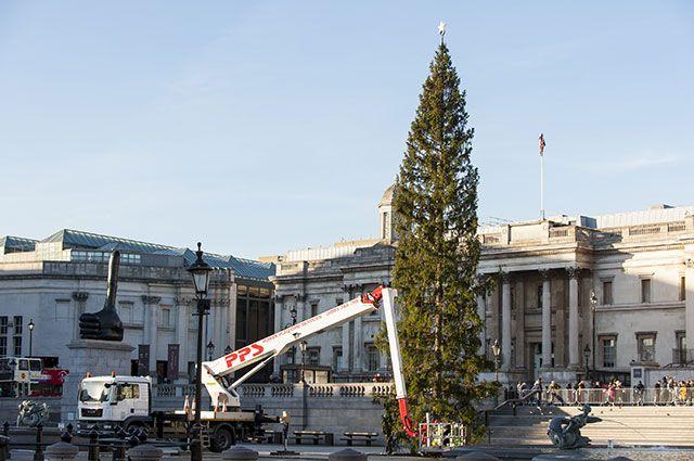 Ёлка на Трафальгарской площади в центре Лондона.