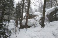 Волонтёры обнаружили в лесу останки пропавшего без вести жителя Удмуртии