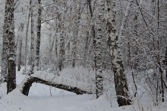 В начале недели в регионе будет идти снег.