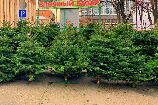 Елочный базар в Краснодаре.