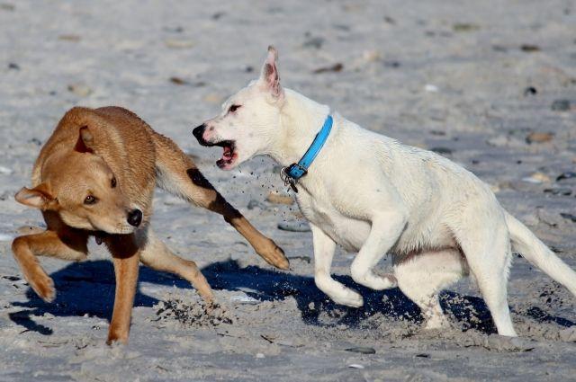 Информацию о местах нахождения безнадзорных собак можно отправлять по электронной почте otlov.perm@mail.ru или оставлять по телефону 263-14-94.
