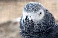 Новотройчанка через суд пыталась получить компенсацию за пол попугая.