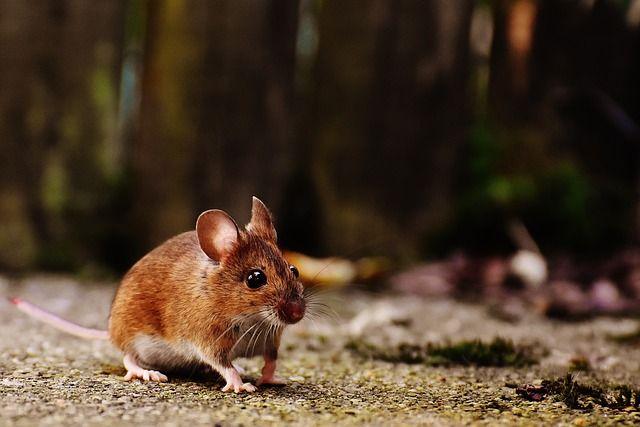 В Минздраве прокомментировали видео с мышью в инфекционной больнице Ижевска