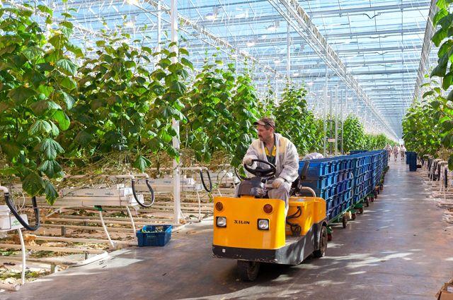 В проект «Ботаника» было вложено более 1 миллиарда рублей.