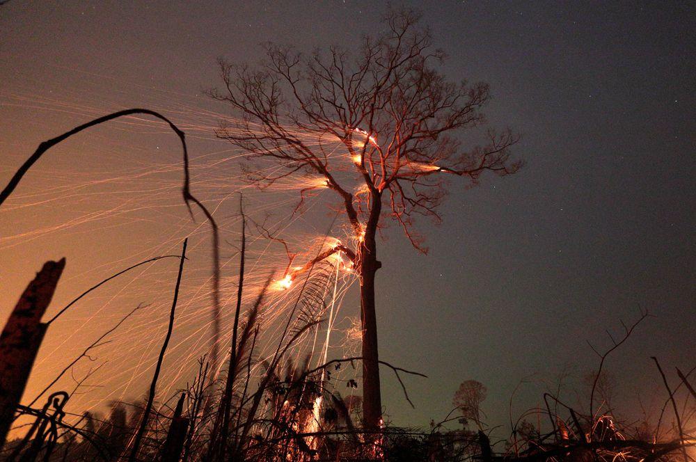 Лесные пожары, бушующие в тропических лесах Амазонки. По данным бразильского Национального института космических исследований (INPE), за первые семь месяцев года огонь уничтожил более 1,86 миллиона гектаров леса. После того, как местные жители стали публиковать в сети фотографии происходящего, хештег #PrayforAmazonia стал одним из самых популярных в Twitter.