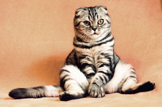 В Санкт-Петербурге насчитывается более 30 гостиниц и отелей для домашних животных.
