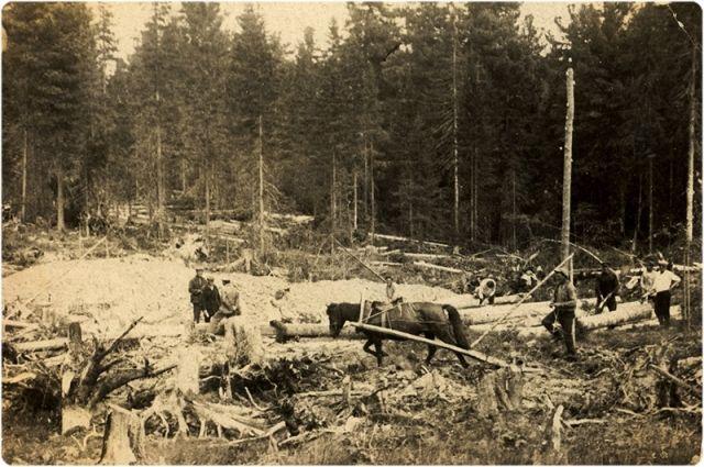 Лесозаготовки в Остяко–Вогульском округе