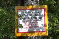 Многие жители Челябинска болезненно отнеслись к идее вырубить участок городского бора.