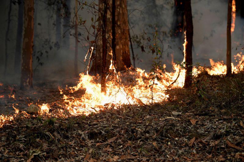 Пожары около города Милтон в штате Новый Южный Уэльс.