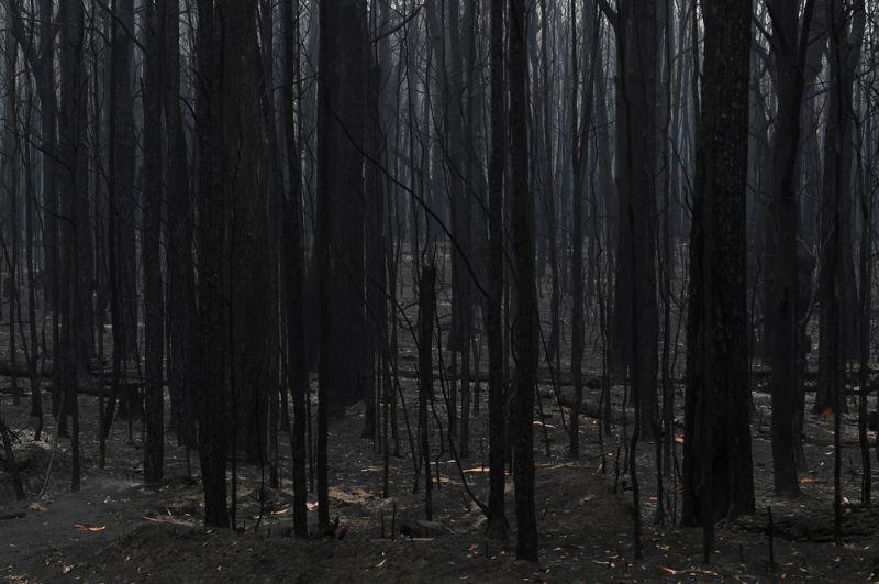 Сгоревшие деревья около города Нора в штате Новый Южный Уэльс.