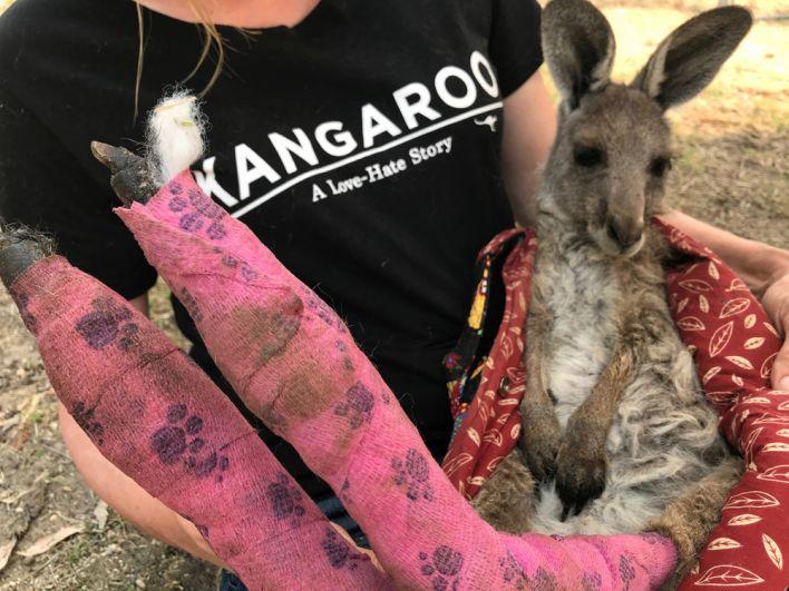 Волотнер держит на руках раненого кенгуру, спасенного из огня в районе Голубых гор.