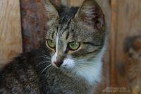 Сейчас под опекой дворника-энтузиаста 97 кошек.