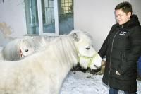 Пони не пациенты центра. Впрочем, по словам Елизаветы Скорыниной, нет абсолютно здоровых животных, есть недообследованные.