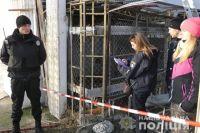 Тигров, найденных на столичном Жуковом острове, передали в спецучреждение