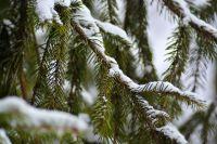 В регионе потеплеет к понедельнику, 13 января.