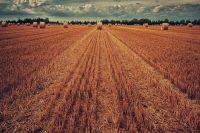 Экспорт в ЕС сельхозпродукции: Украина вошла в топ-3 по итогам 2019 года
