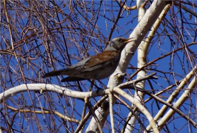 Больше всего птиц заметили в Затулинском и Западном жилмассивах города.
