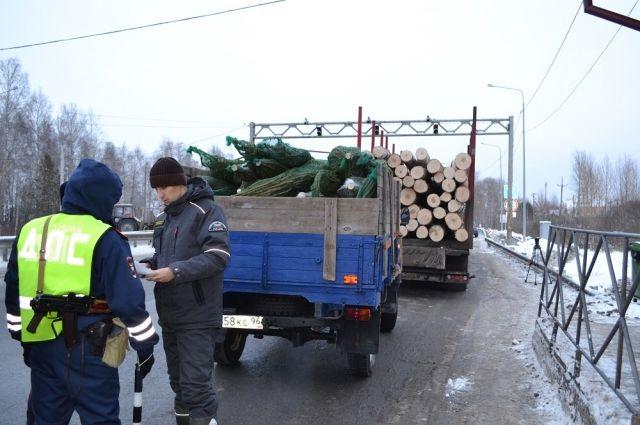 В тюменских лесах выявили более 30 фактов незаконной рубки новогодних елок