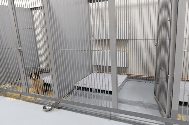 В Лабытнанги начал работу первый на Ямале приют для бездомных животных