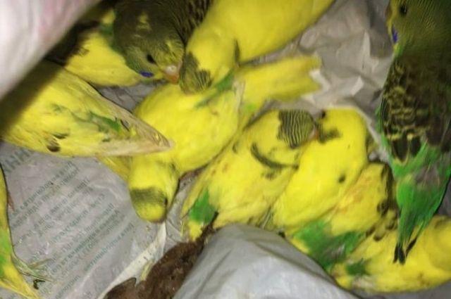В Харькове выбросили в лес 50 попугаев: подробности