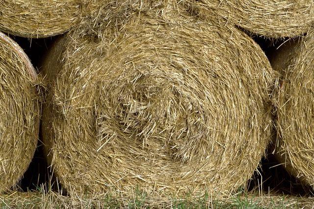 Пожар в Мамоново уничтожил 1,5 тонны сена
