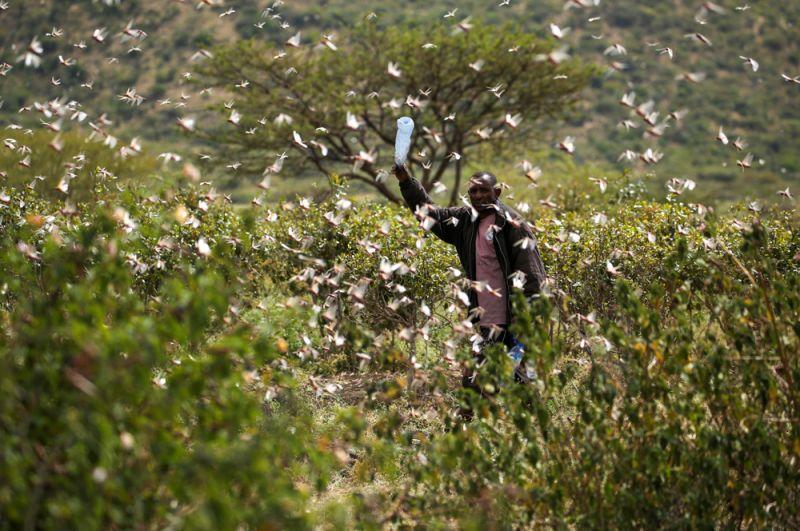 Фермер на окраине города Джиджига в Эфиопии.