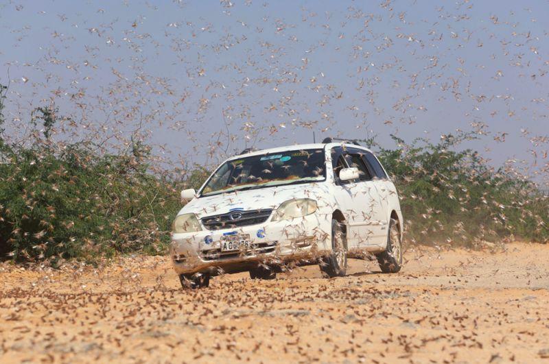Автомобиль на дороге в городе Дусамареб в Сомали.
