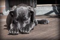 Владельцы собак в Ижевске жалуются на реагент