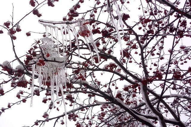 Пик волны тепла в Пермском крае ожидается в период с 16 по 20 января. В результате отклонение температуры от нормы за две декады месяца составит 8,5-10° по всей территории края.