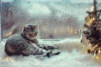 Синоптики прогнозируют в Украине снегопады: дата