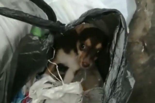 Найденный щенок