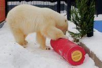 Белые медведи — сообразительные животные. Новые игрушки они освоили довольно быстро.