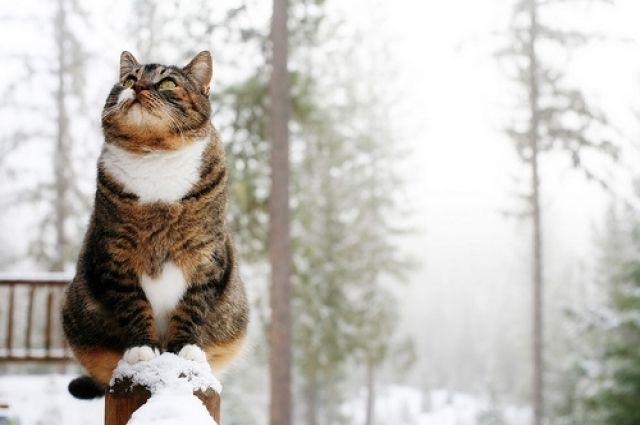 Синоптики уточнили дату снегопадов в Украине: подробности